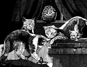 W Fraser Sandercombe Seer Cats