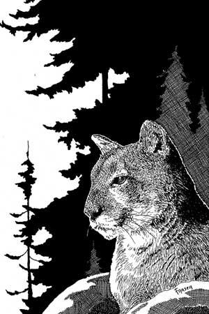 W Fraser Sandercombe Sentinel Cat